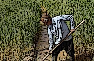 خسارت کشت کشاورزان اصفهان پرداخت می شود