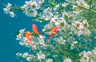 به شکوفه ها به باران برسان سلام ما را